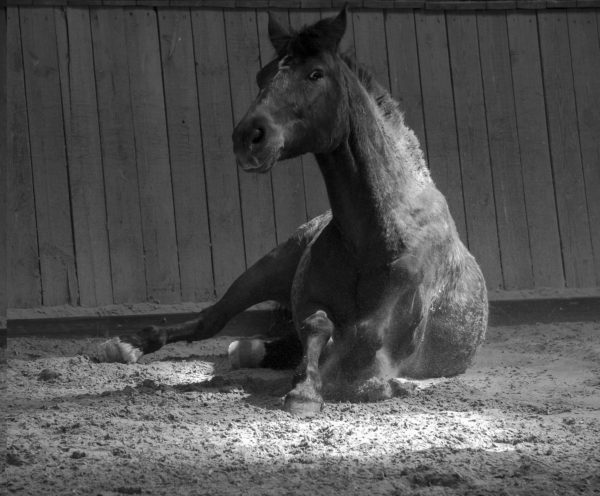 Persönlichkeitsentwicklung mit Pferden